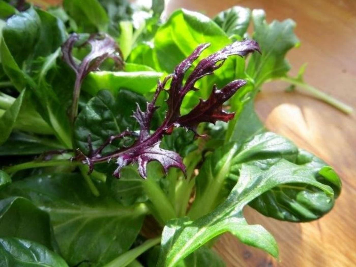 asia salate erntefrisch im winter die umweltberatung. Black Bedroom Furniture Sets. Home Design Ideas