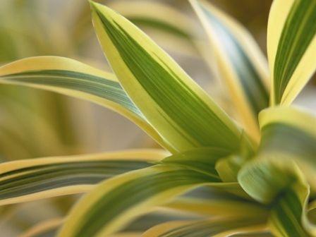 Zimmerpflanzen schenken for Shop zimmerpflanzen