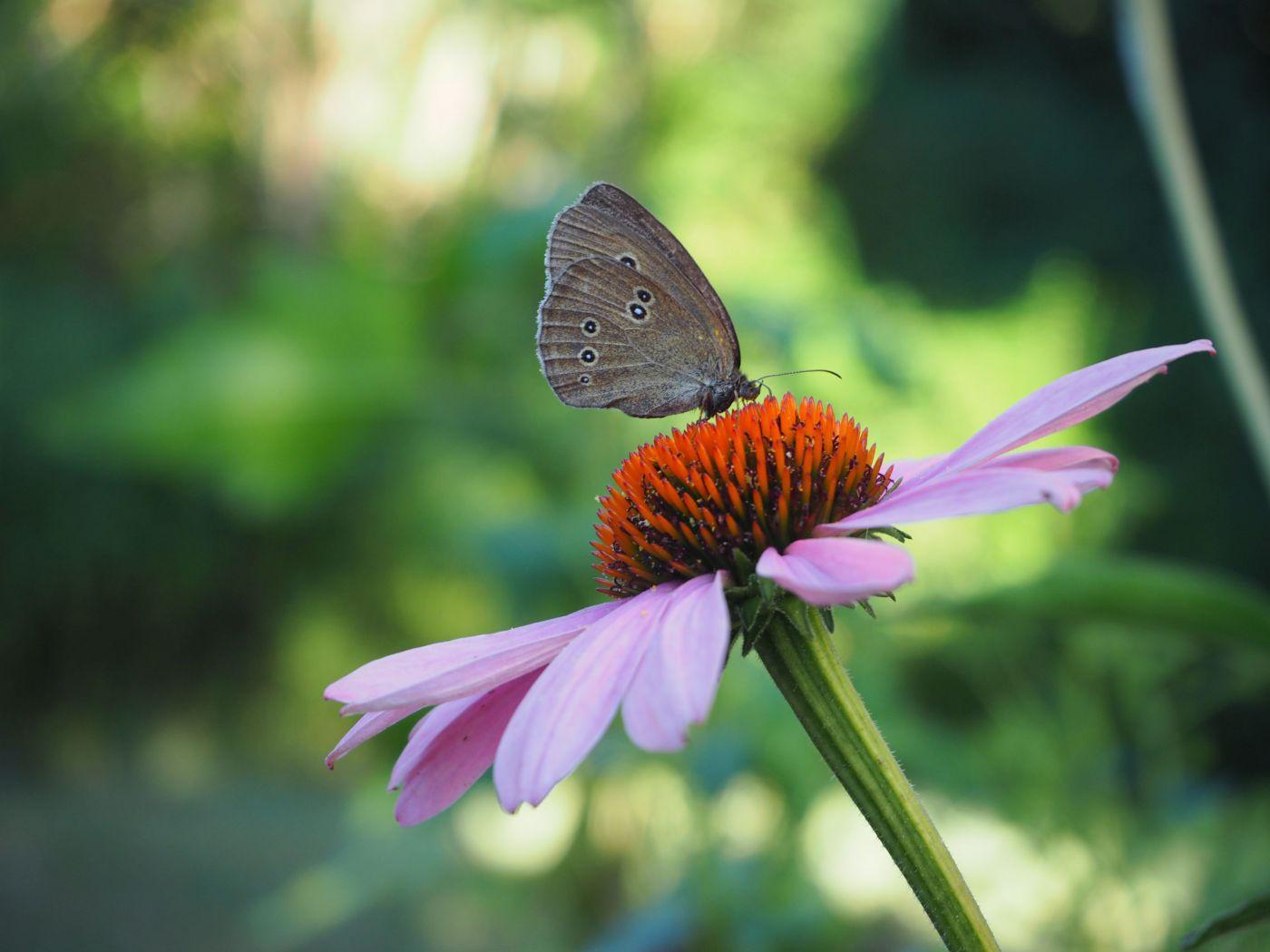 3 einfache wege um im alltag insekten zu schützen