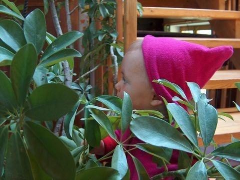zimmerpflanzen f rs raumklima die umweltberatung. Black Bedroom Furniture Sets. Home Design Ideas
