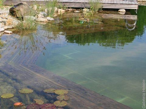 Wasser im garten die umweltberatung for Algenplage im teich