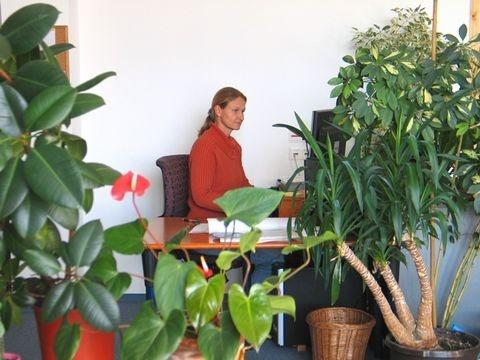 vortrag pflanzen f r wohlbefinden am arbeitsplatz die. Black Bedroom Furniture Sets. Home Design Ideas