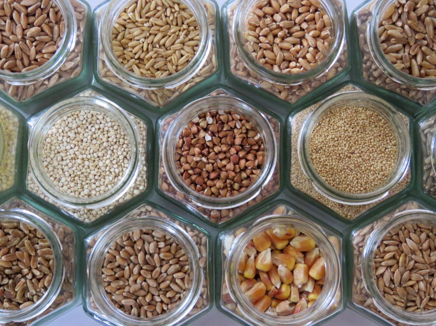 Verschiedene Getreidesorten in sechseckigen Gläsern