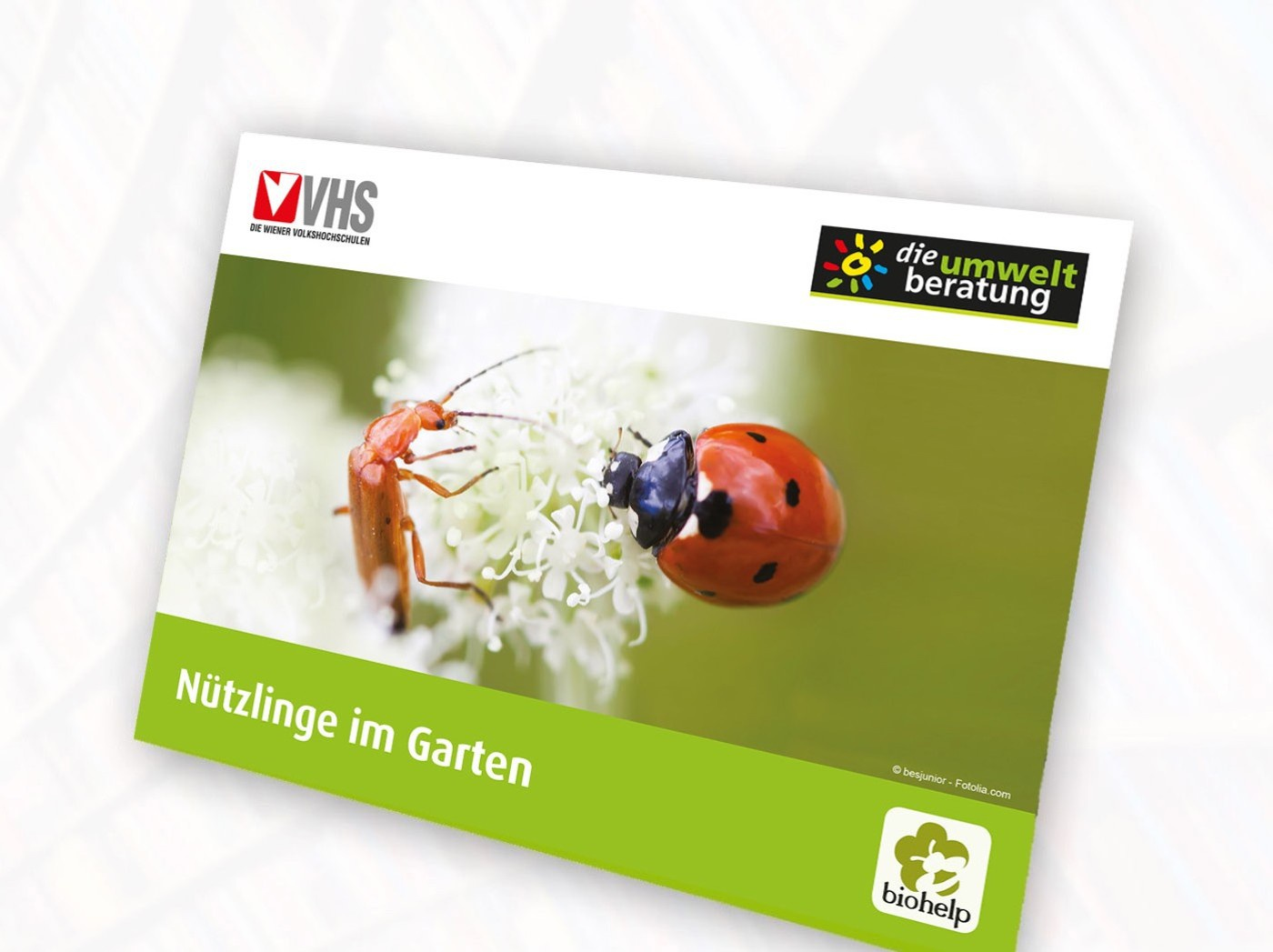 NuetzlingsPOSTER-Cover-web