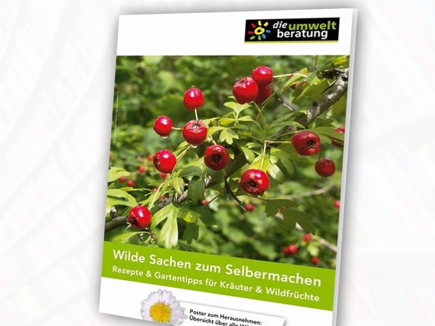 WildeSachen-cover-web