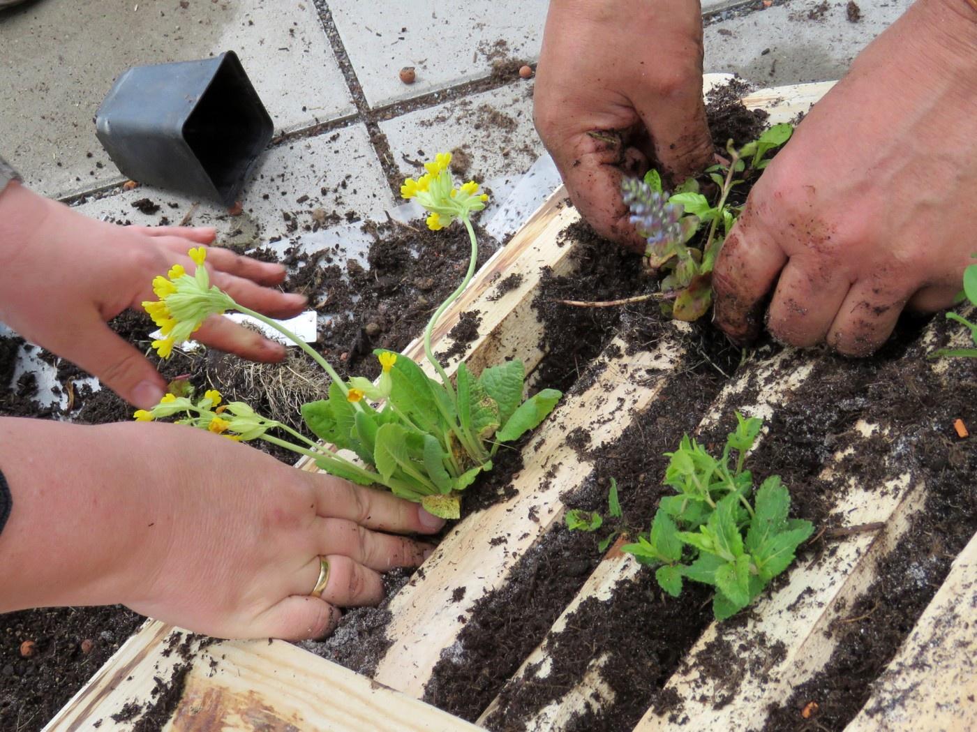 Aufbau einer Bienen-Tankstelle - Pflanzen werden eingesetzt