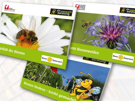 Bienen_CoverVersionen_web