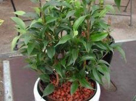 Zimmerpflanzen f r allergikerinnen die umweltberatung - Bluhende zimmerpflanzen bilder ...