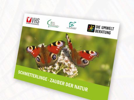Cover Schmetterlingsposter